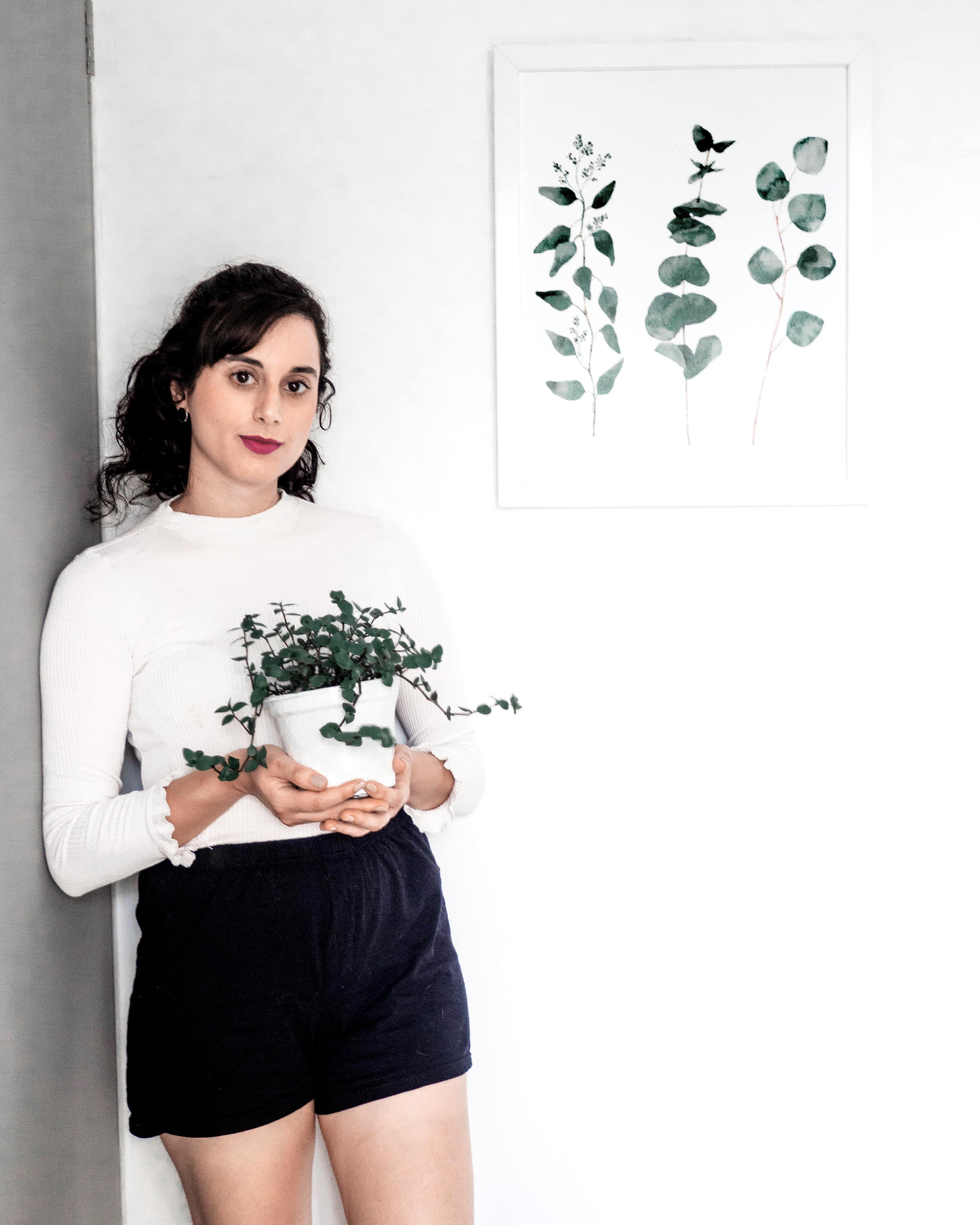 melhores plantas para ambientes internos